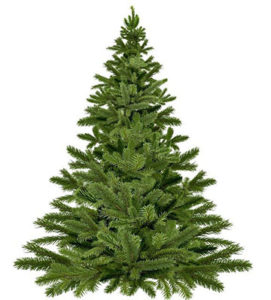 Christmas Tree, undecorated