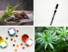 A collage with 2 kinds of edibles, a vape pen, and a hemp plant
