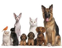 Group of pets: dog, cat, bird, rabbit